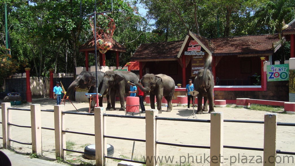 phuket photos activities phuket zoo elephant show