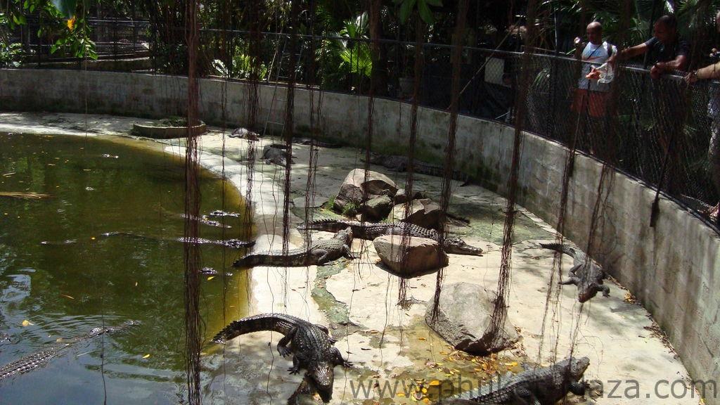 phuket photos activities phuket zoo around