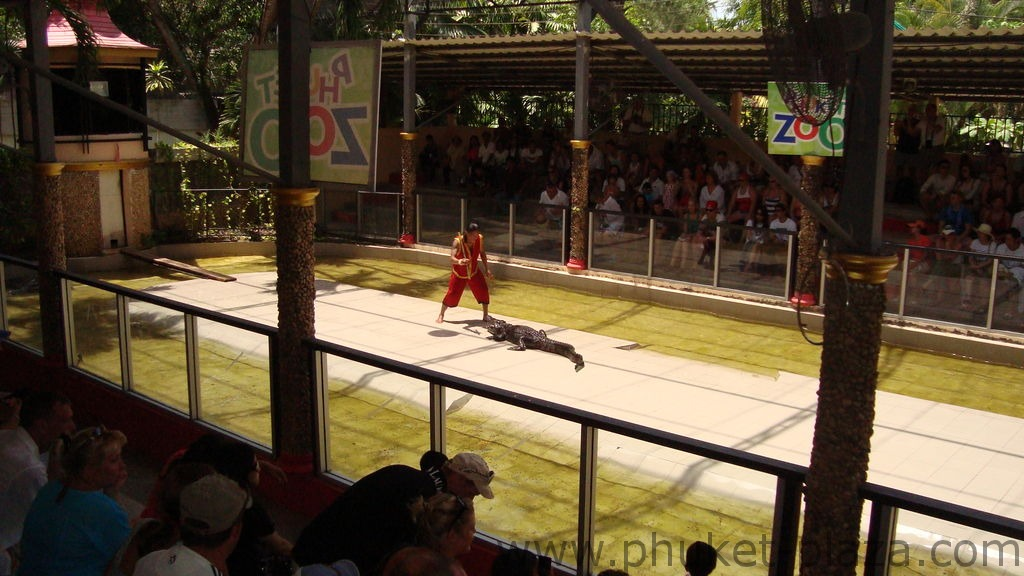 phuket photos activities phuket zoo crocodile show