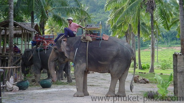 phuket photos daylife chalong elephant trekking