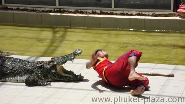 phuket photos activities phuket zoo crocodile show
